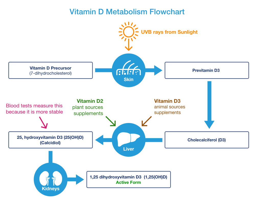 Vitamin D Metabolism Flowchart