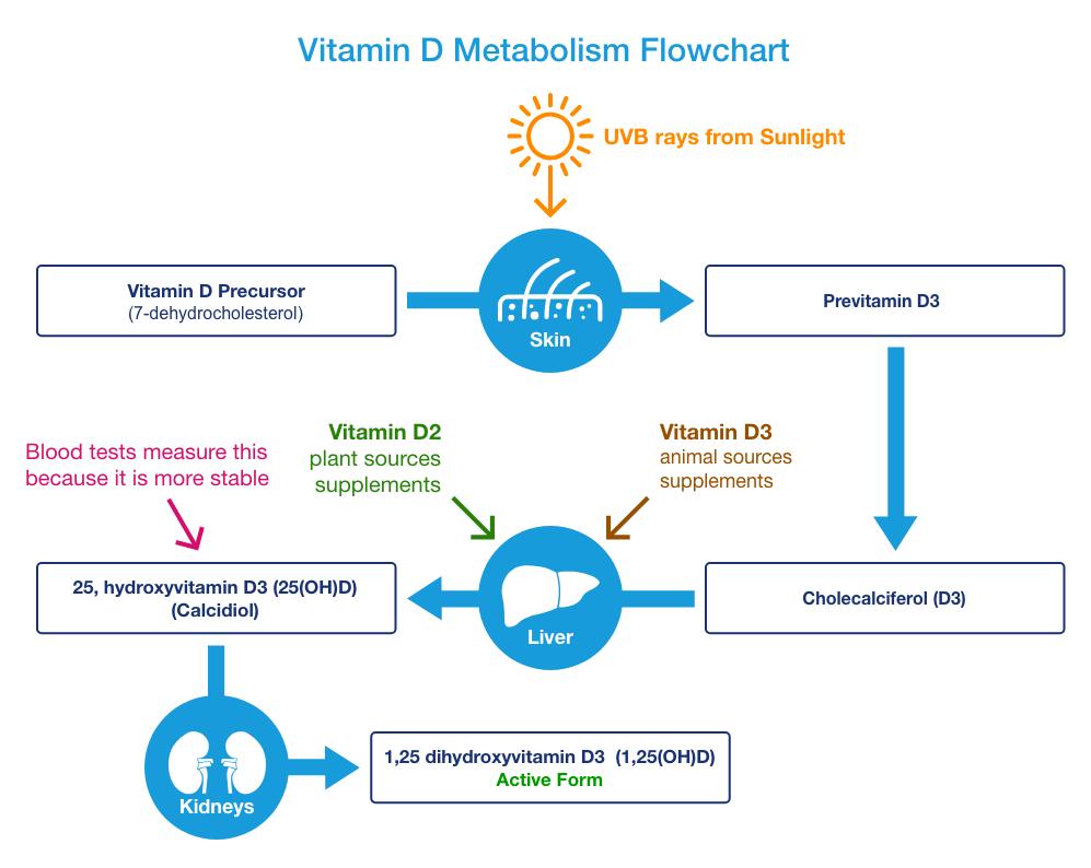 Vitamin D Deficiency Symptoms Supplements Foods Drugs Com